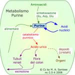 Metabolismo delle purine.