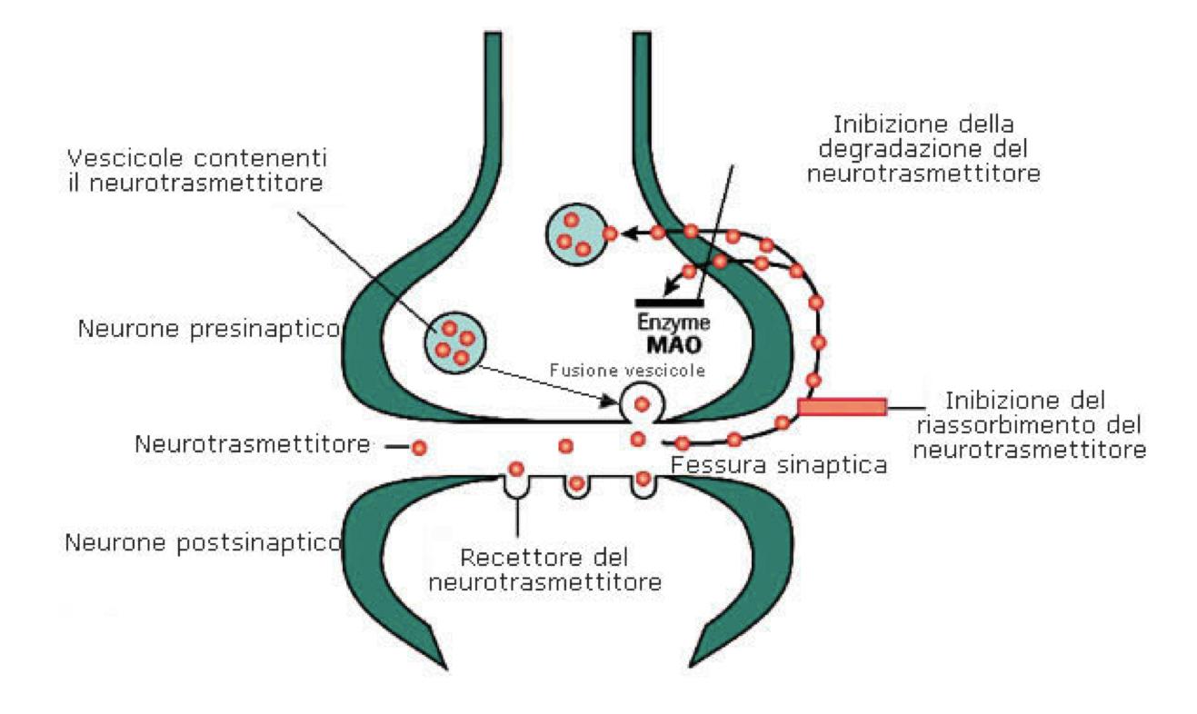 Schema che illustra il funzionamento dei farmaci IMAO