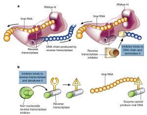 HIV - Terapia HAART