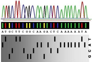 Sequenziamento Sanger: grafico ottenuto dall'elaborazione dati successiva alla fase di elettroforesi.