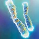 telomeri1