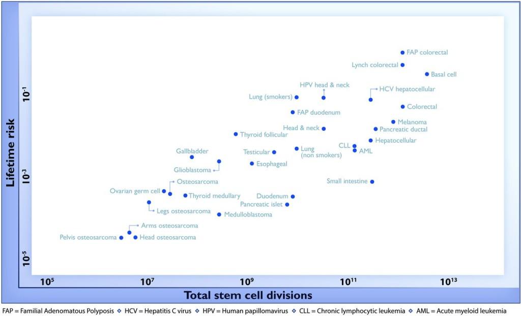 Valutazione del rischio di trasformazione maligna di un determinato tessuto a seconda degli eventi mitotici totali delle staminali coinvolte.