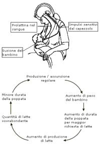 Schema che illustra il Riflesso della suzione