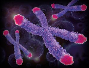 I telomeri, la porzione più distale dei nostri cromosomi